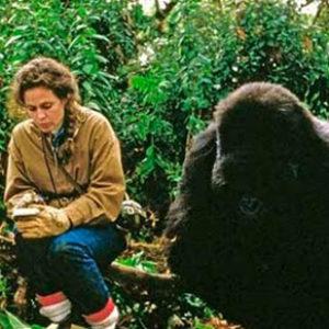fotosp_gorilasenlaniebla5