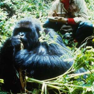 fotosp_gorilasenlaniebla8
