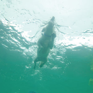 fotosp_tiburon3dlapresa1